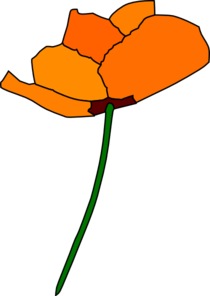 california-poppy-md